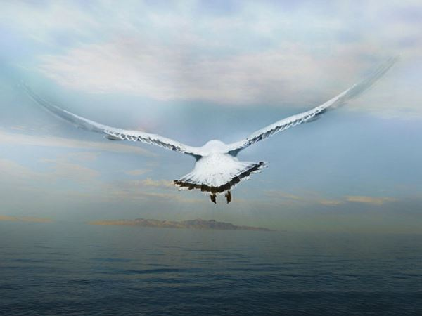 Mơ thấy cánh chim chơi xổ số con gì may mắn nhất?
