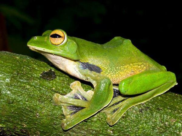 Mơ thấy ếch đánh con gì để chốt trúng dàn đề đẹp?